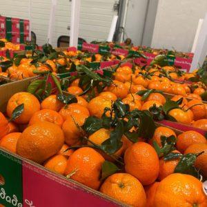 clémentines extra naturel primeurdusud.fr Livraisons de Fruits et Légumes à domicile sur Marseille